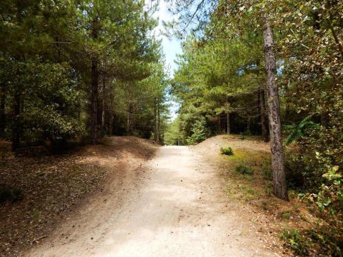 Buckelpiste-durch-den-Wald