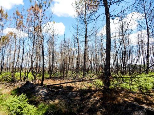 Reste eines Waldbrandes