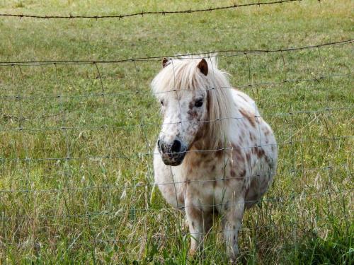 Thelwell-Pony!