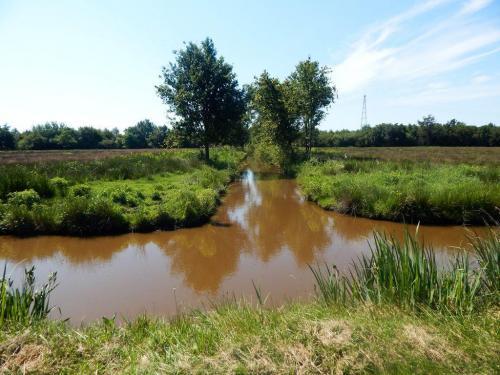 Die Gironde ist noch grün und voller Wasser