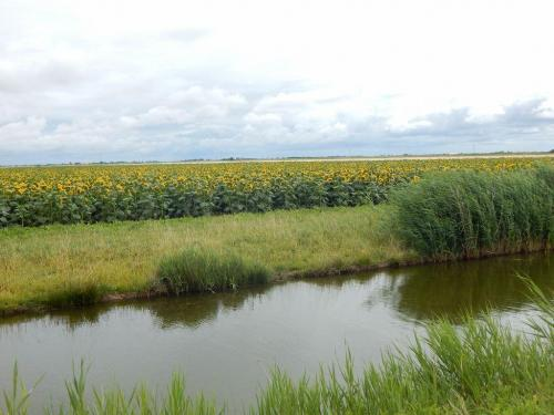Marais-Landschaft-zwischen-Marans-und-Saint-Michel-en-LHerm