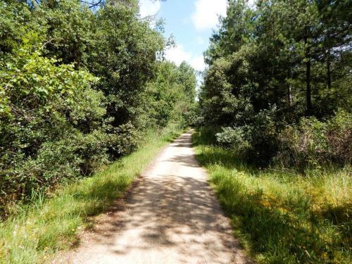 Radwanderweg-durch-den-Kuestenwald